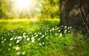 Primavera | Ernestina de Champourcín