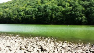 En la verde orilla | Luis de Góngora